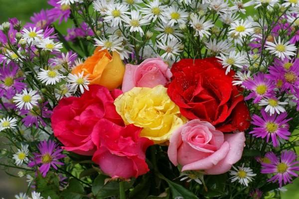 Rosas y margaritas