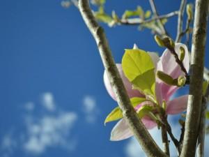 Postal: Flor y brotes en la rama