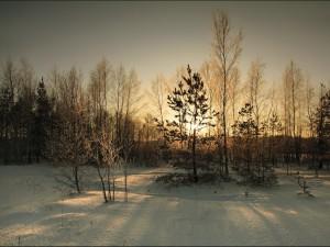 Rayos de sol entre las ramas del bosque
