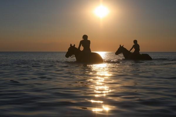 Caminando en el agua con caballos al atardecer