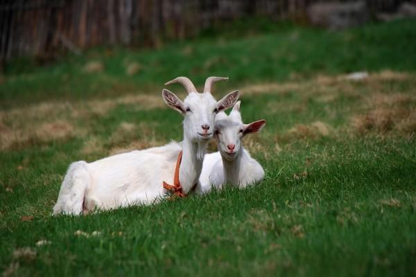 Compartiendo amistad entre animales