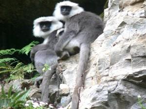 Tres monos en la roca