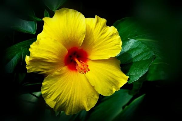 Bella flor amarilla