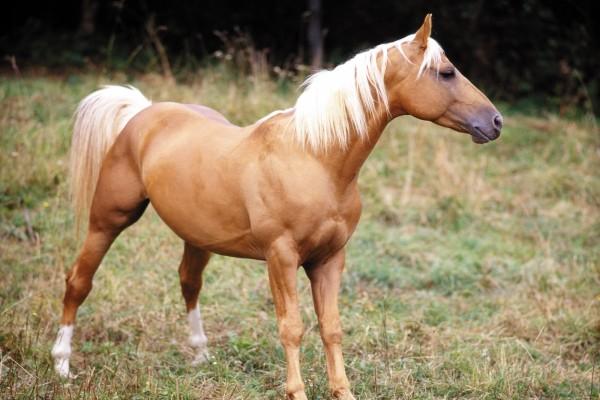 Distinguido caballo marrón