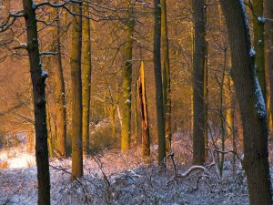 Luz del sol en los troncos