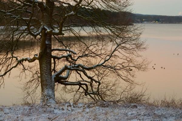 Árbol nevado junto al lago