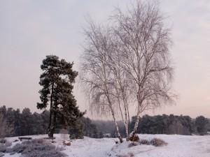 Postal: Árbol sin hojas en un lugar nevado