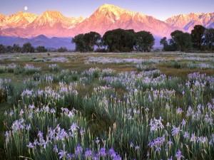 Postal: Bonito paisaje con la luna sobre las montañas