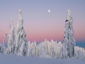 Árboles blancos y la luna en el cielo