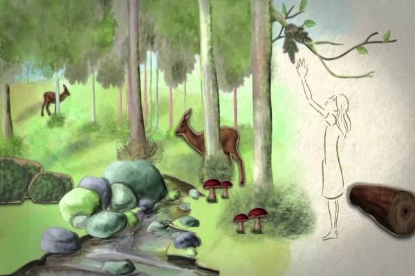 Día Internacional de los Bosques, 21 de marzo
