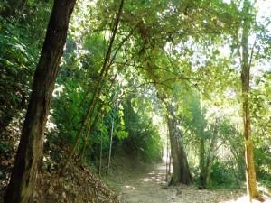 Postal: Día Internacional de los Bosques