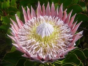 Gran flor