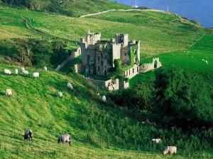 Ovejas en la pradera junto a un castillo