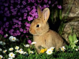 Lindo conejito entre las flores