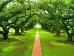 Paseo entre grandes árboles