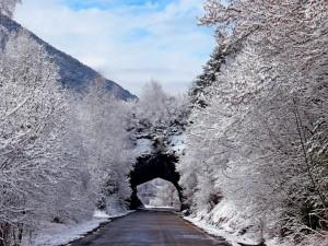 Árboles nevados a lo largo de la carretera