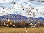 Bandada de pájaros volando por el campo