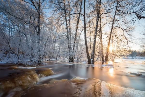 Hielo en el bosque