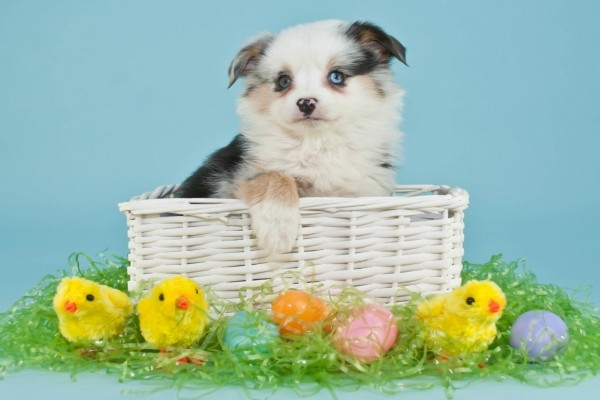 Un perrito dentro de una cesta