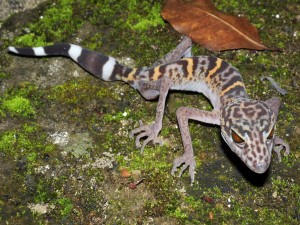 Un peculiar lagarto