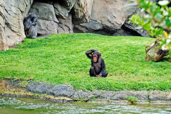 Primates en un zoológico