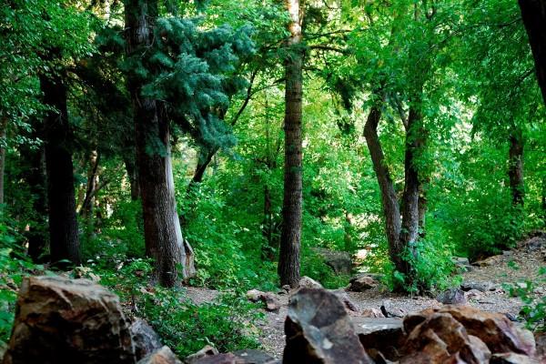 Piedras en el camino del bosque
