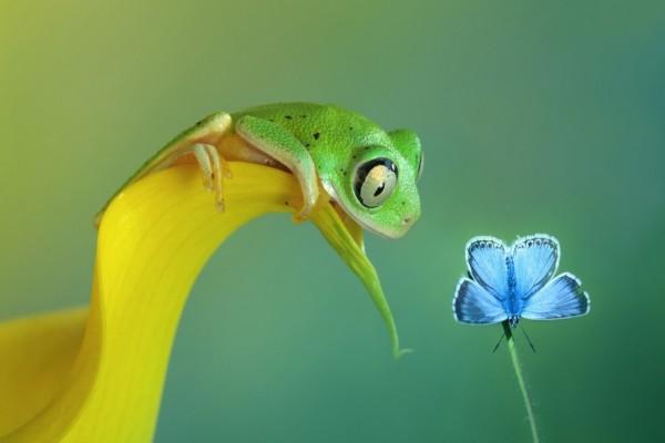 La rana y la mariposa