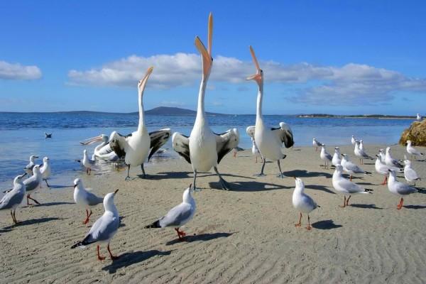 Gaviotas y pelícanos en la playa