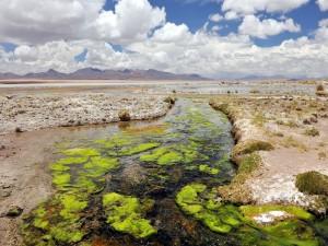 Postal: Río con plantas verdes