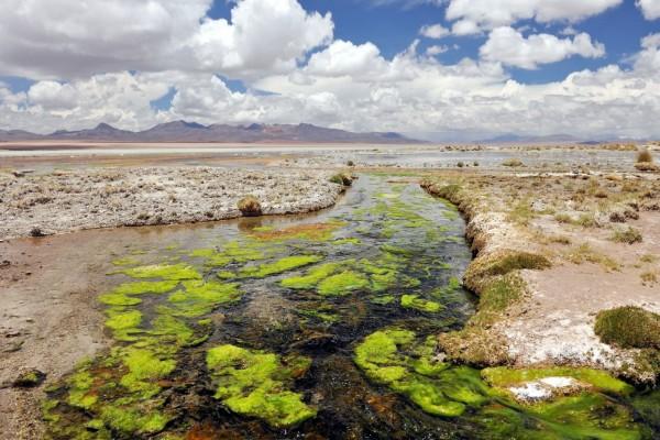 Río con plantas verdes