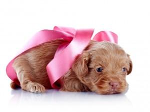 Postal: Dulce perrito con un lazo rosa