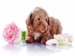 Perro marrón entre flores