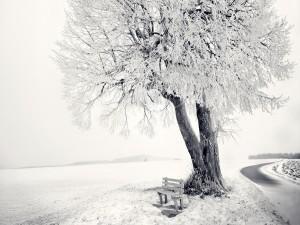 Postal: Banco y árbol en un lugar nevado