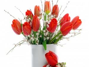 Bellos tulipanes rojos