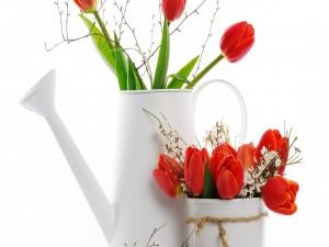 Tulipanes rojos en floreros blancos