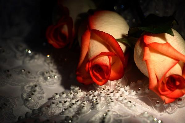 Dos rosas sobre una tela brillante