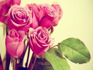 Postal: Ramo de rosas rosas