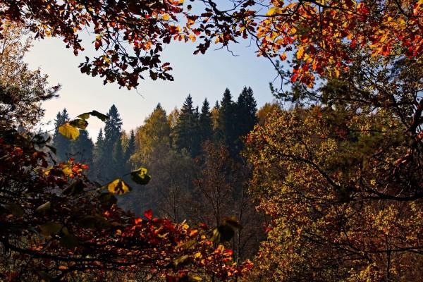 Árboles a comienzos del otoño