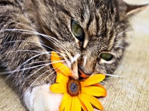 Postal: Gato oliendo una flor
