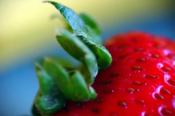 Las hojas de la fresa