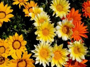Flores de tres colores
