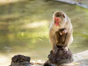 Postal: Macaco con su cría