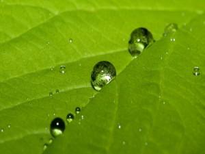 Postal: Redondas gotas de agua sobre la hoja