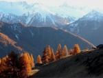 Montañas con nieve y pinos marrones