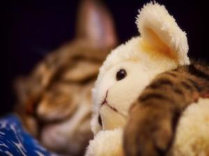 El peluche del gato