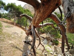 Gran árbol caído