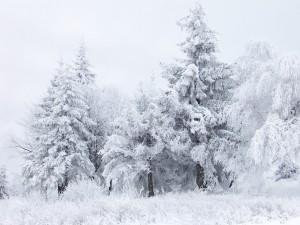 Árboles y plantas blancos por la nieve