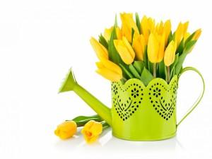 Tulipanes amarillos en un florero
