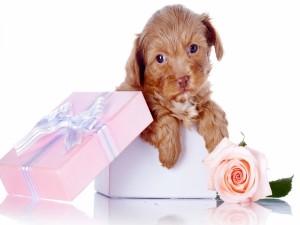 Postal: Caja rosa con un perro de regalo