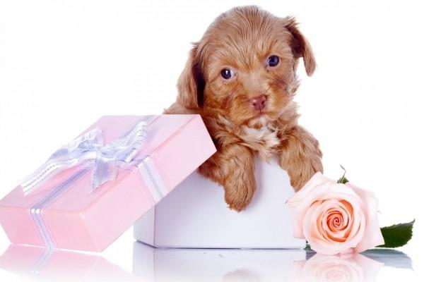 Caja rosa con un perro de regalo